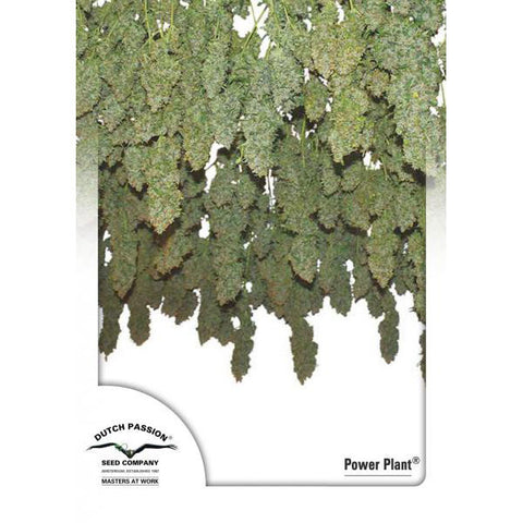 Dutch Passion - Power Plant - 5-Pack Feminized