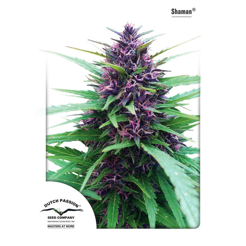 Dutch Passion - Shaman - 5-Pack Feminized