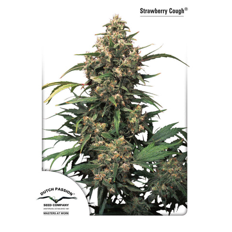 Dutch Passion - Strawberry Cough - 5-Pack Feminized