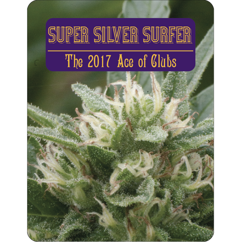 7 Aces Seeds - Super Silver Surfer - 15-Pack Regular / Photoperiod (Not Feminized)