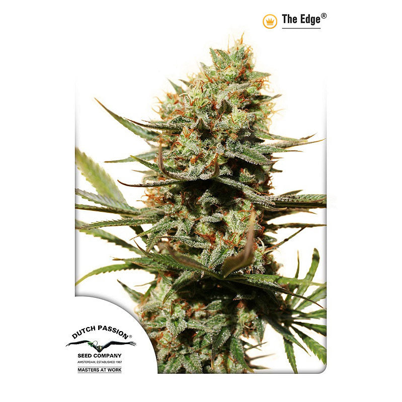 Dutch Passion - The Edge - 5-Pack Feminized
