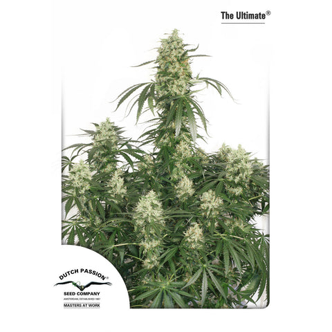 Dutch Passion - The Ultimate - 5-Pack Feminized