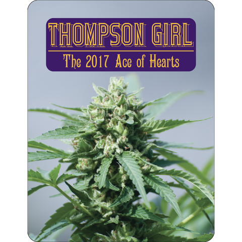 7 Aces Seeds - Thompson Girl - 15-Pack Regular / Photoperiod (Not Feminized)