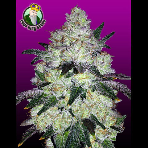 Crop King Seeds - White Cookies - 5-Pack Feminized