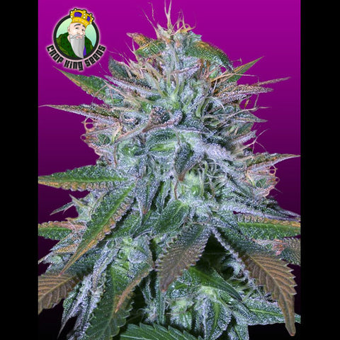 Crop King Seeds - White Widow - 5-Pack Feminized