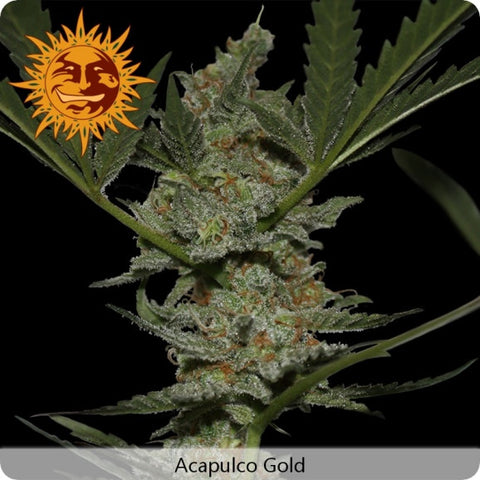 Barney's Farm - Acapulco Gold - 5-Pack Feminized