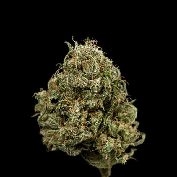 Dinafem - Cheese XXL Auto - 5-Pack Feminized