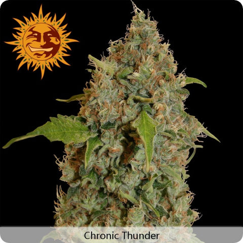 Barney's Farm - Chronic Thunder - 3-Pack or 5-Pack Feminized