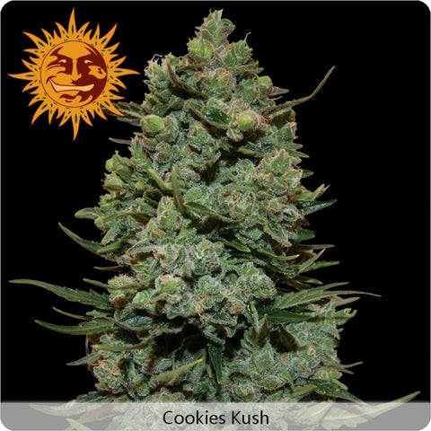 Barney's Farm - Cookies Kush - 5-Pack Feminized