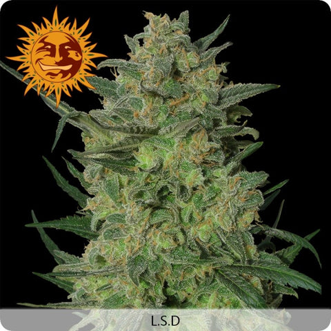 Barney's Farm - LSD - 5-Pack Feminized
