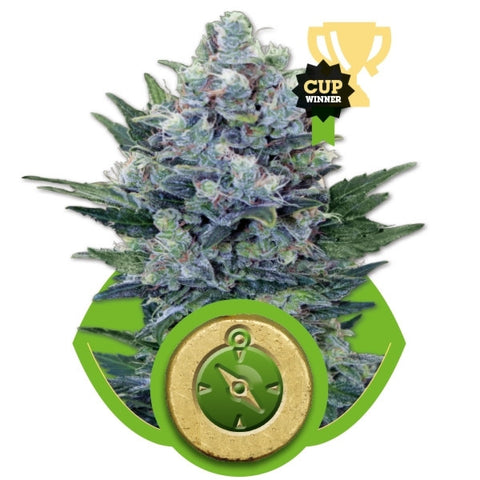 Royal Queen Seeds - Northern Light Automatic (Autoflowering) - 5-Pack Feminized