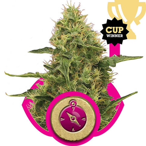 Royal Queen Seeds - Northern Lights - 5-Pack Feminized