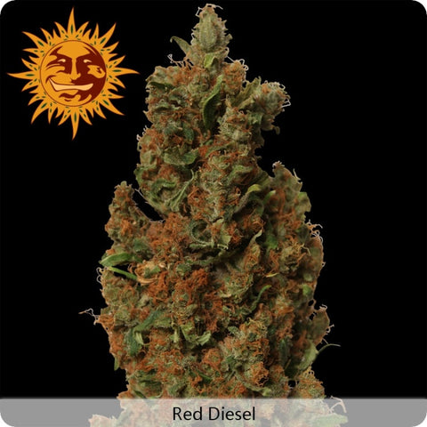 Barney's Farm - Red Diesel - 5-Pack Feminized
