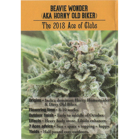 7 Aces Seeds - Beavie Wonder (AKA Horny Old Biker) - 15-Pack Regular / Photoperiod (Not Feminized)