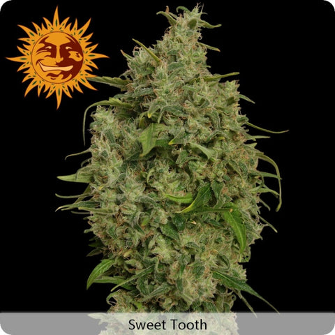 Barney's Farm - Sweet Tooth - 5-Pack Feminized
