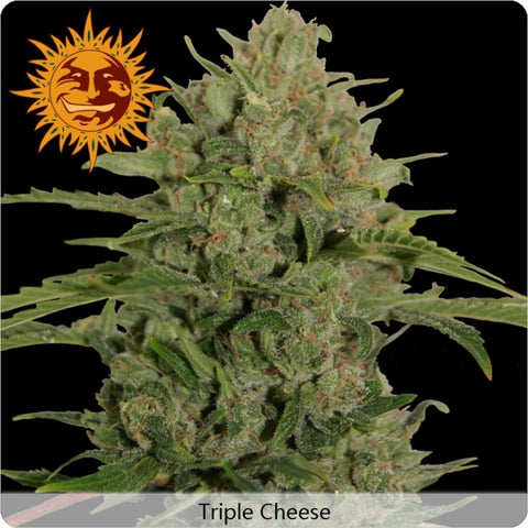 Barney's Farm - Triple Cheese - 5-Pack Feminized