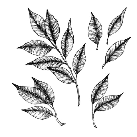 Shaded Leaves - Temporary Tattoo