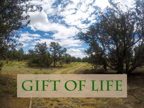 Zion Affinity Gift of Life