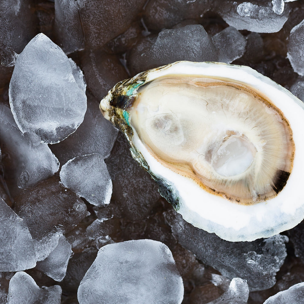 Slurp in Style: How to Taste an Oyster