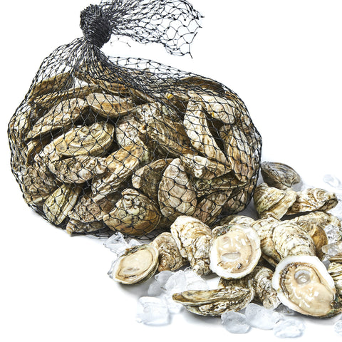 White Stone Oysters 100
