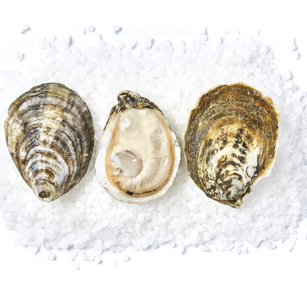 White Stone Oysters