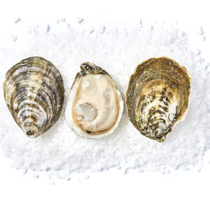 Load image into Gallery viewer, White Stone Oysters (50 ct)