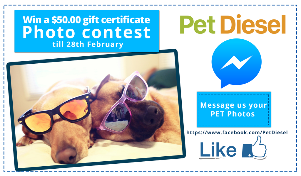 Participate in the Pet Diesel Pet Photo Contest