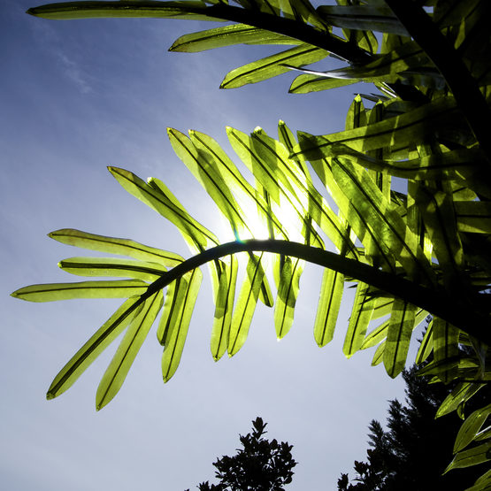 Wintergreen P6912, 120v realistic commercial led palm tree, green available in various sizes