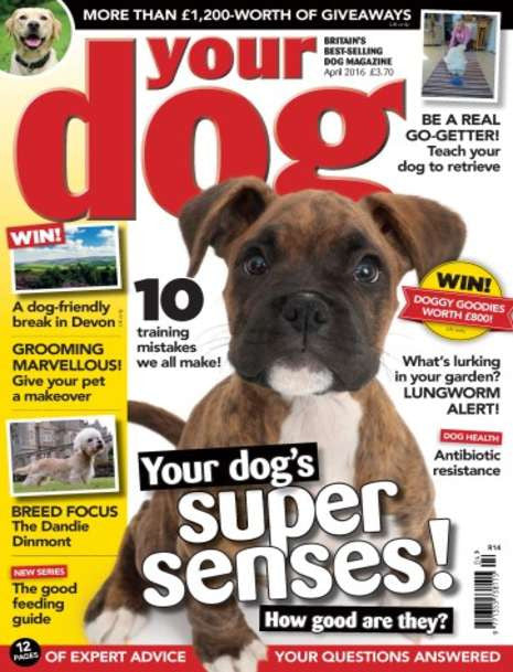 As seen in YOUR DOG magazine