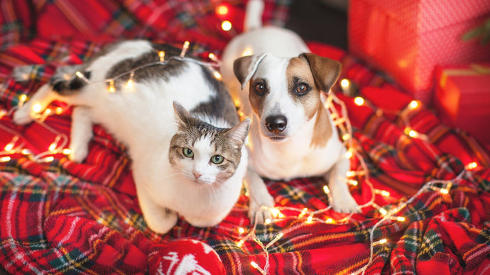 Christmas is a potentially hazardous time for cats and dogs