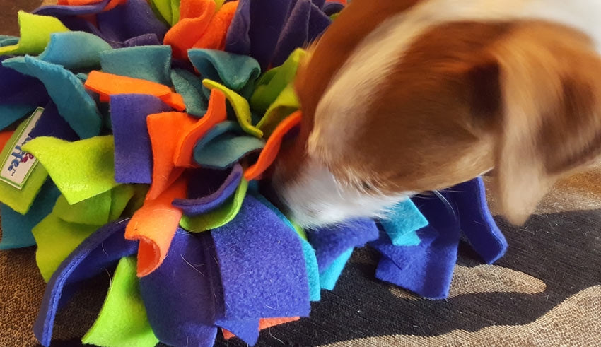 Tips & Ideas on using a Ruffle Snuffle mat with your dog