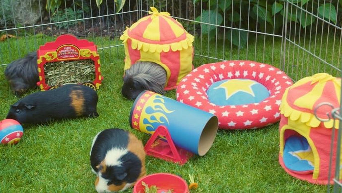 10 Reasons Why HayPigs!® Make The Best Guinea Pig Accessories