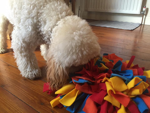 Brian and his Ruffle Snuffle mat - Candy