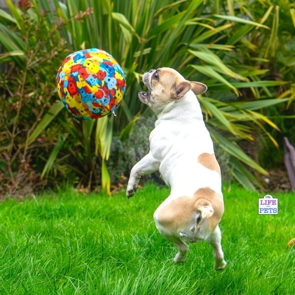 PetBloon - Dog Balloon Ball Enrichment Toy
