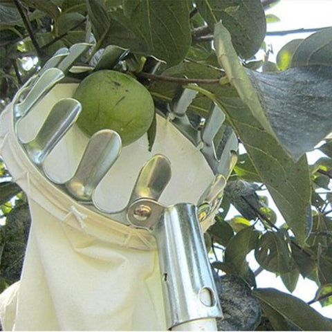 Image of Horticultural Fruit Picker Tool