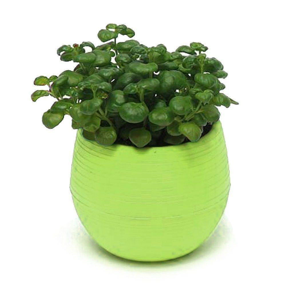 Mini round Shaped Office Decor Flower Seed Planter Pot