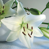 Blue Heart Lily Plant Seeds 50 Particles - FREE Offer - $0.00