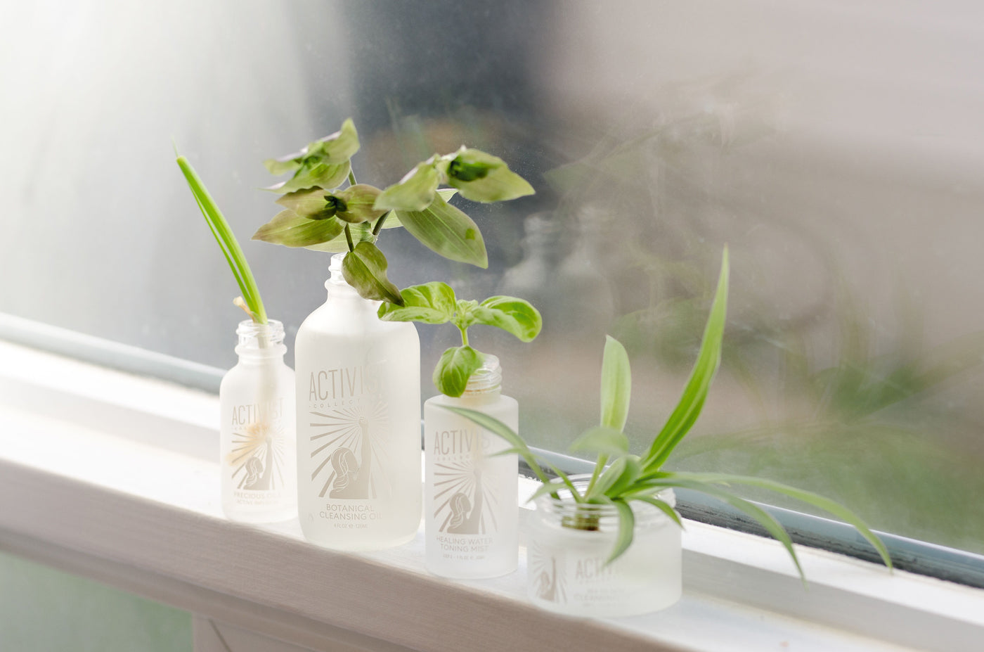 How to propagate plants on your windowsill
