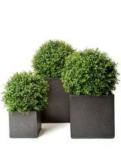 Artificial Topiary Trees & Boxwood Balls