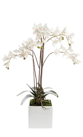 Faux White Orchid Arrangement In White Square Pot 81cm