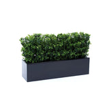 Boxwood bushes in window box planter