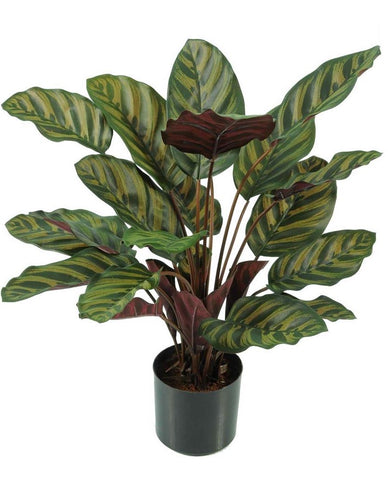 Artificial Faux Calathea Makoyana Plant With Green and Pink leaves