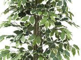 Artificial Ficus Nitida Variegated Leaves