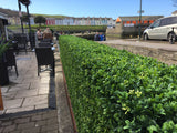 Best Quality Artificial Hedges