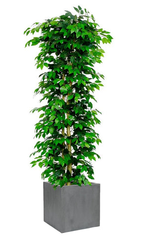 Fire Retardant Artificial Ficus Nitida Tree - Artificial Green