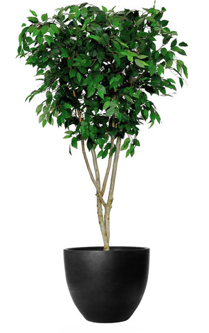 Handmade high quality artificial Ficus Benjamina Tree. Green Leaves by Arti Green