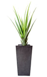 Pandanus Plants by Artificial Green