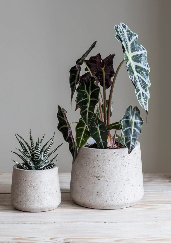 Set Of 2 Stratton Tapered Cement Plant Pots Artificial Green