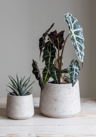 Stratton tapered cement concrete plant pots