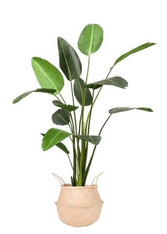 Large artificial Strelitzia Plant